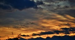 ~~ Les Grues de l 'Apocalypse....!~~ (Jolisa) Tags: montierender tangsduder novembre2016 grues ciel sky nuages coucherdesoleil apocalypse