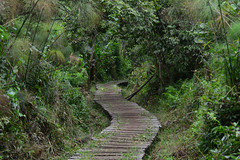 Path in the swamp (supersky77) Tags: uganda bigodi wetlands sanctuary swamp palude africa trail path sentiero