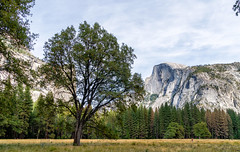 Tree and Half Dome (Moshe Ovadya) Tags: colorefexpro trees emount ngc sonysel1670zvariotessarte1670mmf4zaoss royalarches nature washingtoncolumn nikcollection sonyα6300 meadow northdome yosemite lightroom halfdome ilce6300 sel1670z sony a6300 e mountain rock variotessarte41670 yosemitevalley california unitedstates us outdoor hdr 3xp