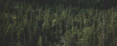 Untitled (shimizacken) Tags: ifttt 500px fjord norway norge ottery otterya skorstad nordtrndelag namdalen namsen shimi zacken shimizacken fuji xt1 16mm forst winter autumn