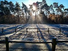 Winter Morning (L I C H T B I L D E R) Tags: kln cologne knigsforst december dezember winter sun sonne reif ice handy koppel gatter zaun