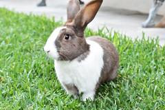 My bunny (melyescamilla1) Tags: bunny conejo animal pretty rabit conejito mascota animals grove green pasto nikon nikond3400 animales pet beautiful fat gorda coneja hermosa beauty 1855mm lente1855mm cuteanimals beautyanimals