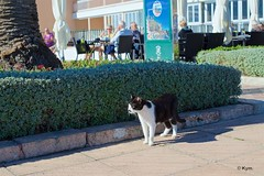Kitty (Kym.) Tags: andalucia andalusia cat day2 kitty nerja people spain street terrace otherpeoplesgang