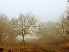 Foggy Autumn Day (cattan2011) Tags: wildlifereserve gentleshawcommon midland england natureperfection naturephotography nature trees foggy landscapephotography landscape travelblogger traveltuesday travel autumn