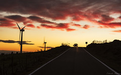 Coming from the sunset (Eduardo Regueiro) Tags: red sunset clouds galicia spain road windmil cows relax sky fall atardecer generador molino