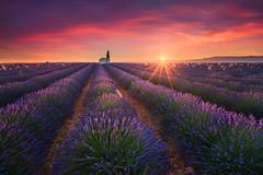 Living in Purple (albert dros) Tags: provence floewrs sunset travel purple albertdros sunstar house tourism france tree