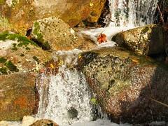 Águas paradas (rgrant_97) Tags: portugal centro viseu tondela serra caramulo soutobom pr6 caminhadas walking autumn outuno