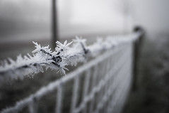 To cold barbed wire. - Explored (mion.danny) Tags: barbedwire cold frozen ice winter explored