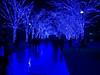 Icy Step (H.H. Mahal Alysheba) Tags: snapshot tokyo night lumix gx7 illumination christmas leicadg summilux 25mmf14