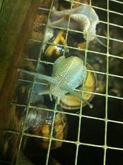 Les escargots de Montvendre