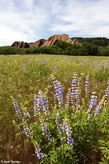 Flowers and Red Rocks (isaac.borrego) Tags: flowers clouds colorado meadow denver redrocks roxboroughstatepark canonrebelt4i