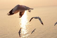 Departing to Mrauk U (FoodNightStand) Tags: birds dawn burma rakhine kaladan