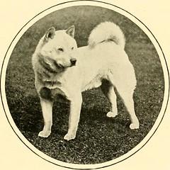 Anglų lietuvių žodynas. Žodis manchester terrier reiškia mančesterio terjeras lietuviškai.