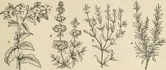 Anglų lietuvių žodynas. Žodis anise seed reiškia anyžių sėklos lietuviškai.