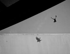 negative crow (salar hassani) Tags: shadow blackandwhite triangle sony crow salar trigonometry hassani rx100m3