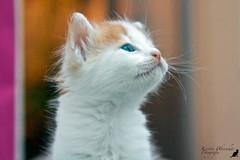 (#2.352) little kitten (unicorn 81) Tags: animal cat kitten funny little sommer greece grecia katze griechenland mykonos tier reise mikonos niedlich streetcat younganimal mykonosgreece jungtier    cutte mkonos drollig southaegean