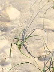 Sand, Shadows, Footprints and Grasses (Cat B Photography) Tags: ocean sea summer sun newyork beach birds bay sand shadows sunny longisland grasses sunkenmeadow kingspark seagrass longislandbeaches