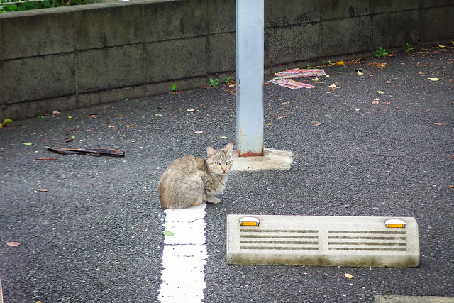 Today's Cat@2014-08-10