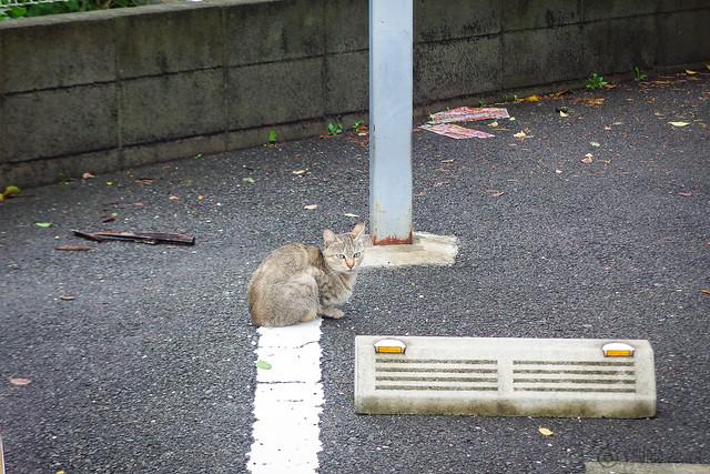 Today's Cat@2014-08-10