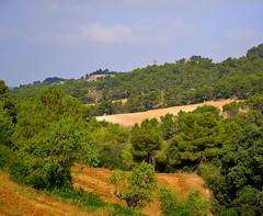 Paisatge de la Vall d'Ondara. (Angela Llop) Tags: spain eu catalonia palams lasegarra santguimdefreixenet