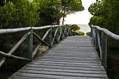 Parque Nacional de Doñana (España), Ecosistema de dunas (ipomar47) Tags: park parque españa pentax dunes huelva national nacional dunas k5 ecosystem matalascañas doñana ecosistema