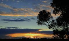 Winter Sunset Bulla July 2014 (maginoz1) Tags: winter sunset canon flora australia victoria bee bulla july2014 gumtreegraces