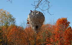 Hive (Sarah Hina) Tags: autumn tree hive