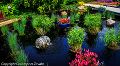 Water garden (Doctor Christopher) Tags: nature gardens