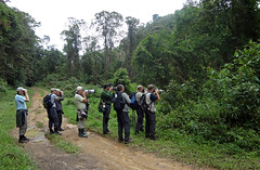 Birdwatchers in Boa Nova - Bahia