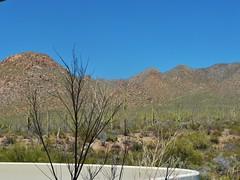 view from visitor center patio (jb10okie) Tags: park travel vacation arizona usa mountains america spring nps trails saguaro nationalparks saguaronationalpark 2013 westdistrict