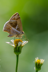 Borboletinha (mcvmjr1971) Tags: macro ex butterfly insect lens nikon sigma borboleta f28 horta hsm d7000