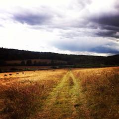 Getting lost is how i found myself (aWonderingAdventurer) Tags: adventure fields wondering runningaway