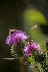 Fleißige Bienchen #1