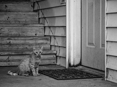 Please, give me a home? (.Chris Lee) Tags: door summer blackandwhite bw cats white black home monochrome animal animals stairs cat outside outdoors lumix midwest feline stair sitting olympus monochromatic iowa panasonic mat telephoto sit stray felines grayscale siding doormat 43 omd feral strays greyscale vario m43 mft strayanimal panasoniclumix strayanimals microfourthirds 45200mm variog lumix45200mm panasoniclumix45200mm variog45200mm olympusem5 olympusomdem5 omdem5 panasoniclumixvario panasoniclumixvariog45200mm