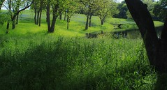 Blue Bonnets By the Pond (lezlievachon) Tags: