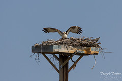 Osprey landing sequence - 13 of 14