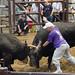 Uwajima Bull Fights