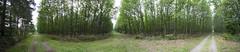 Panoramique en forêt