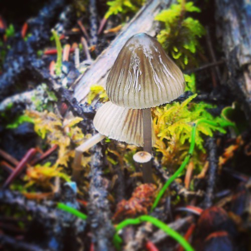 The world beneath your feet 7 #yxy #Yukon #fall #macro