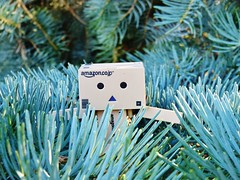 Blue pine (clarehudson0419) Tags: blue tree gardens pine botanical danbo