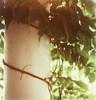 leafy vine (lawatt) Tags: film pillar vine porch instant slr680 jeanshouse theimpossibleproject color600