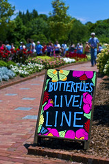 In Line (thefeverhead) Tags: virginia butterflies botanicalgardens lewisginter henrico
