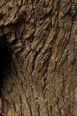 - the lap (press & pleasure - pap) Tags: street tree bark bangladesh