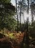 le moment de faire le plein des sens ... (jean-marc losey) Tags: france aquitaine lotetgaronne randonnée forêt contrejour automne autumn arbres vert ocre fougères p7000