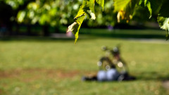 DSC_0114 (miwin) Tags: sweden stockholm street streetphotography park sunny sun autumn resting nature outdoor outoffocus blurry