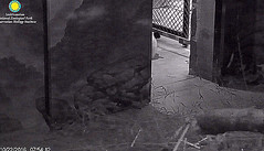 Bei, at school.  ../zc763.png (heights.18145) Tags: smithsoniansnationalzoo beibei meiziang corner panda bear pandabear cuteanimals bearcubs motheranimals ccncby school