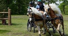 """Die Kutsche. Die Kutschen. Oder: Die Pferdekutsche. Die Pferdekutschen. Die Kutsche wird von einem Kutscher gelenkt. • <a style=""""font-size:0.8em;"""" href=""""http://www.flickr.com/photos/42554185@N00/30144826953/"""" target=""""_blank"""">View on Flickr</a>"""