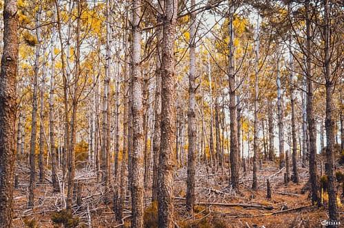 #Autumn paints in colors that #summer has never seen . ============================ #belyounech #abmlifeiscolorful #dscolor #instagoodmyphoto #colorhunters #colorlove #colorcolourlovers #justgoshoot #colorventures #cueta #makeyousmilestyle #gibarltar #mat