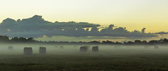 Morning Mist (Scott Sanford) Tags: canon eos 6d texas outdoor color ef2470mmf28lusm landscape hayfield hay pasture fog sunrise naturallight