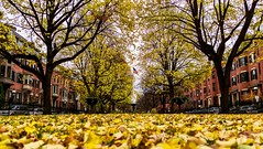 Union Park, Boston, in Late Fall ((Jessica)) Tags: unionpark brownstones flag americanflag lowangle lowperspective yellowleaves carpetofleaves sonyalpha a6000 autumn sigmalens foliage sonya6000 massachusetts sigma19mm boston fall sigma sony sonyalpha6000 leaves newengland symmetry southend